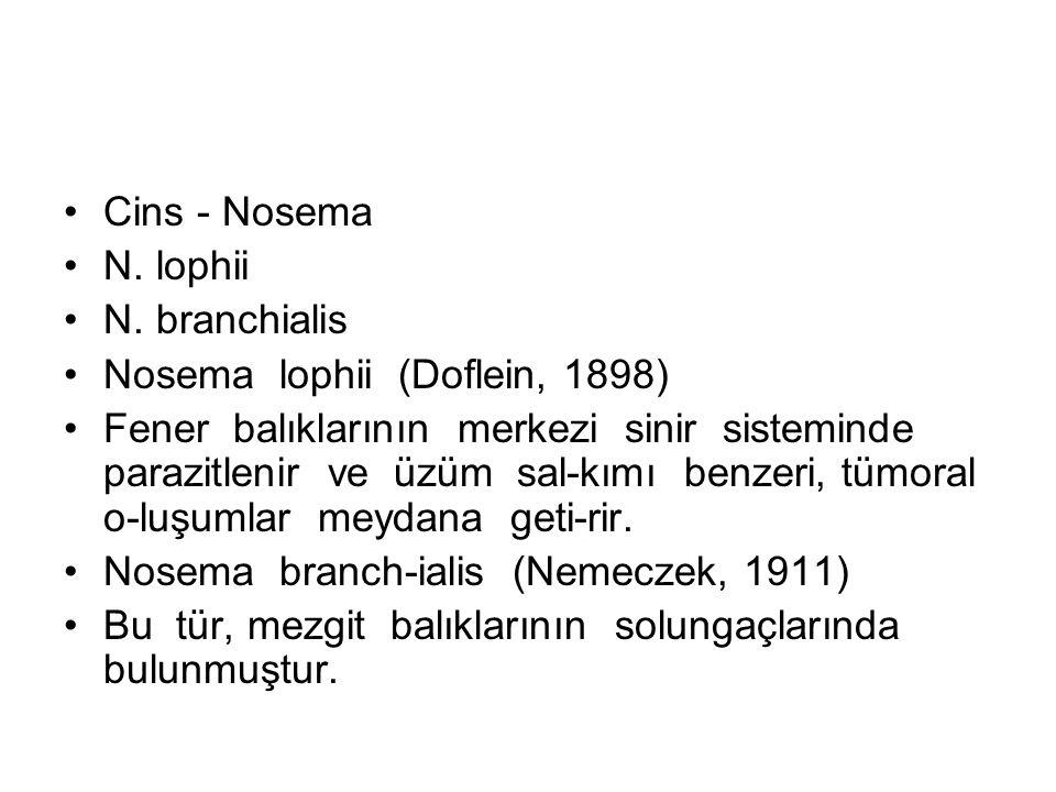Cins - Nosema N. lophii N.
