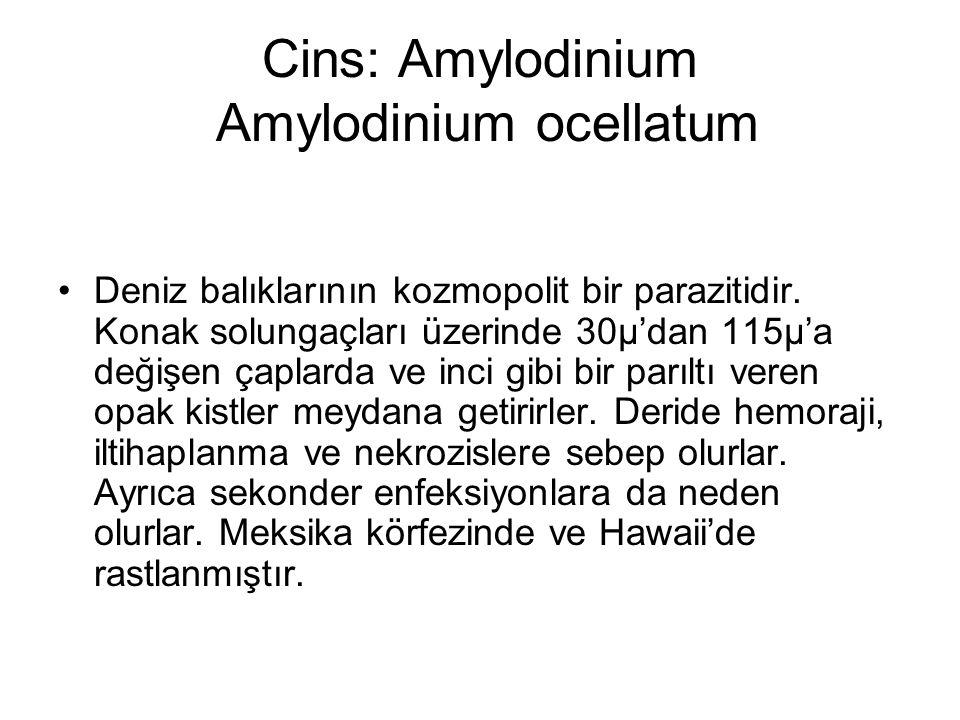 Cins: Amylodinium Amylodinium ocellatum Deniz balıklarının kozmopolit bir parazitidir.