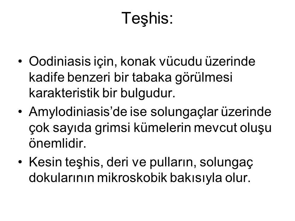 Teşhis: Oodiniasis için, konak vücudu üzerinde kadife benzeri bir tabaka görülmesi karakteristik bir bulgudur.
