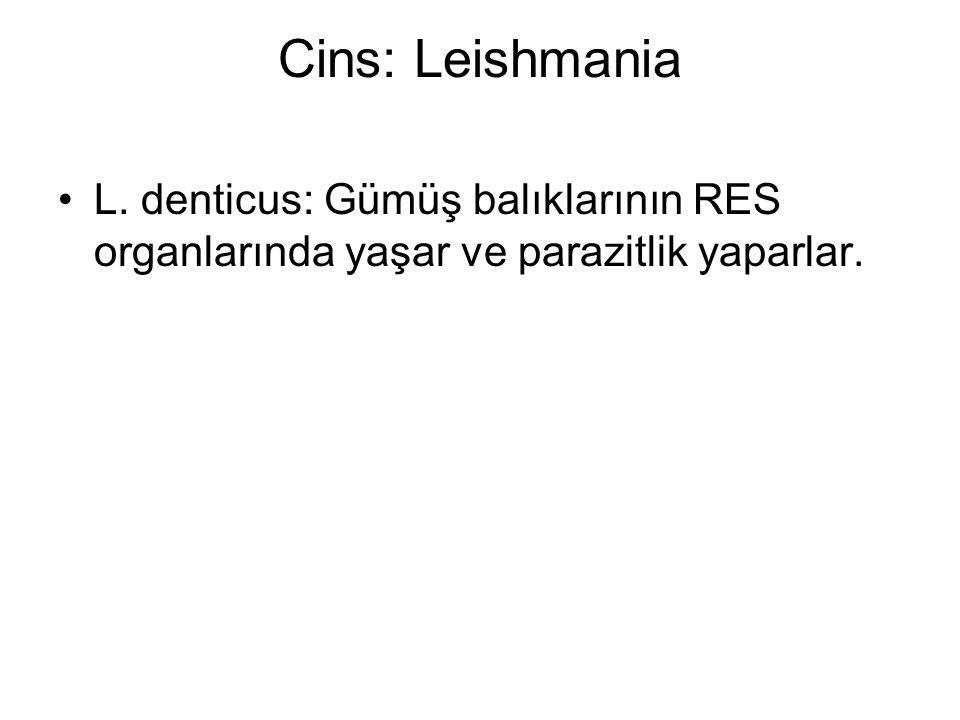 Cins: Leishmania L. denticus: Gümüş balıklarının RES organlarında yaşar ve parazitlik yaparlar.