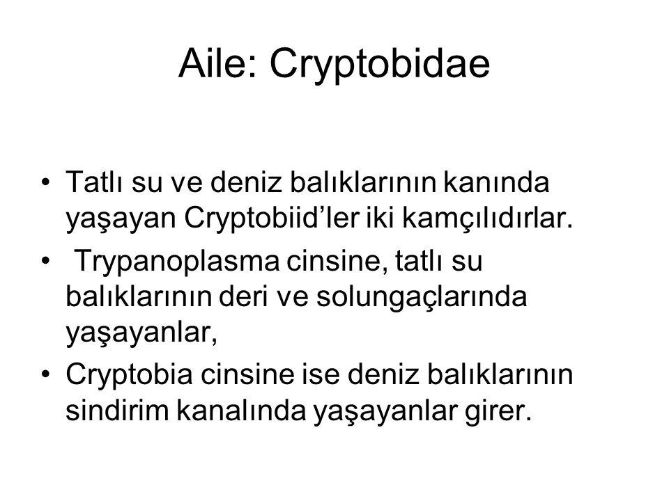 Aile: Cryptobidae Tatlı su ve deniz balıklarının kanında yaşayan Cryptobiid'ler iki kamçılıdırlar.