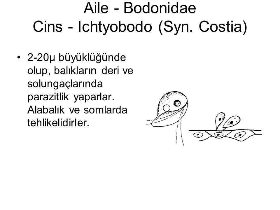 Aile - Bodonidae Cins - Ichtyobodo (Syn.