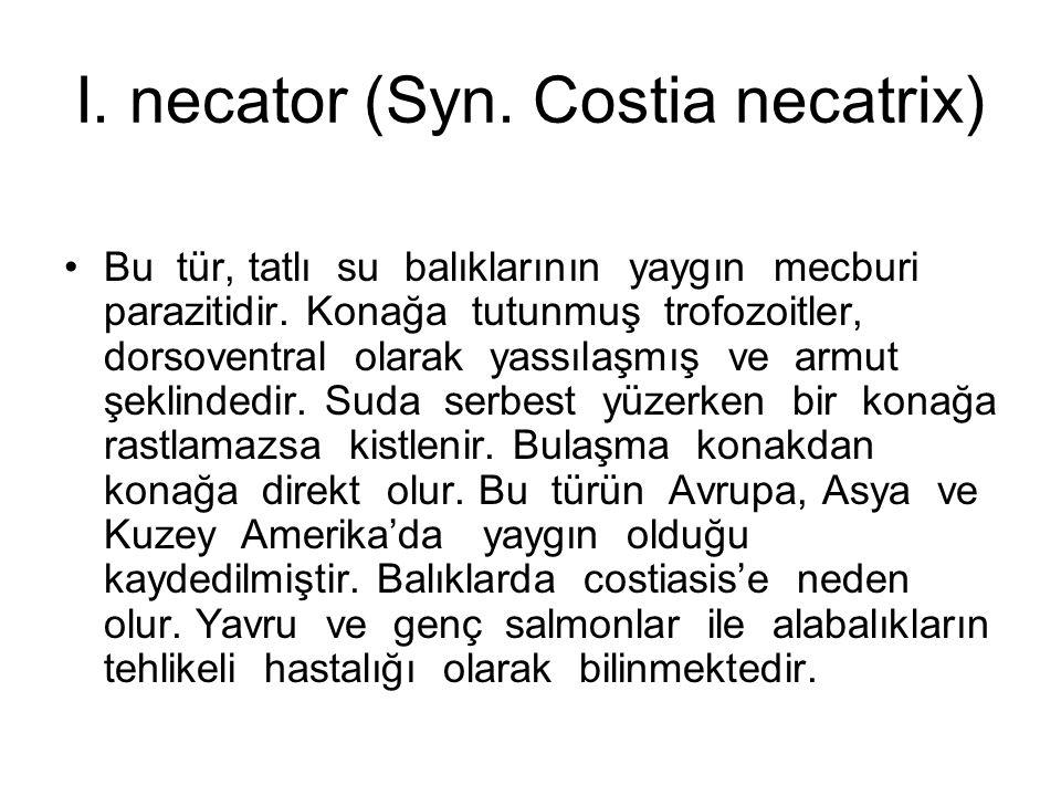 I. necator (Syn. Costia necatrix) Bu tür, tatlı su balıklarının yaygın mecburi parazitidir.