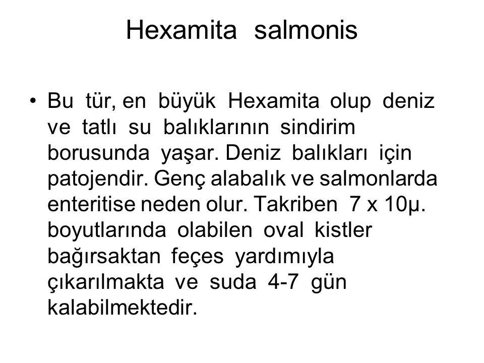 Hexamita salmonis Bu tür, en büyük Hexamita olup deniz ve tatlı su balıklarının sindirim borusunda yaşar.