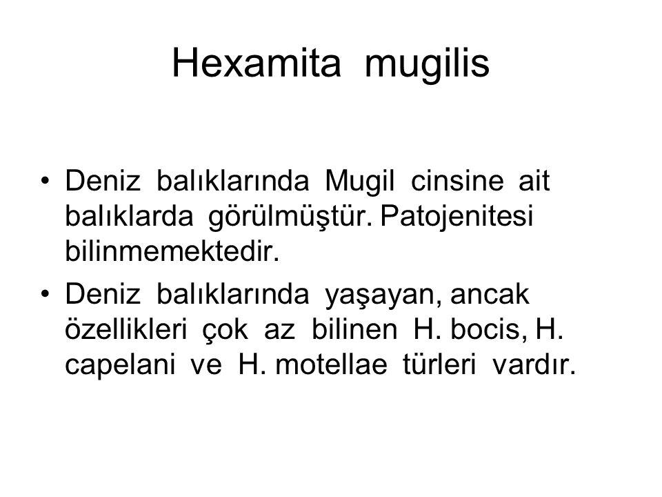 Hexamita mugilis Deniz balıklarında Mugil cinsine ait balıklarda görülmüştür.