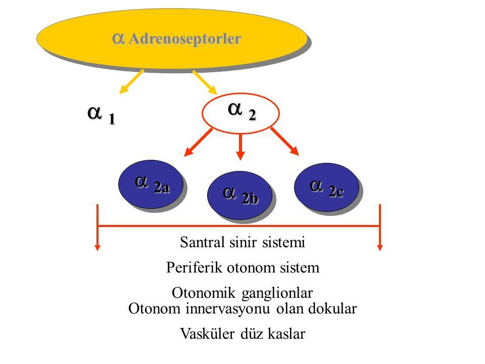  Adrenoseptorler  1 1 1 1  2 2 2 2  2a  2b  2c Santral sinir sistemi Periferik otonom sistem Otonomik ganglionlar Otonom innervasyonu olan dokular Vasküler düz kaslar