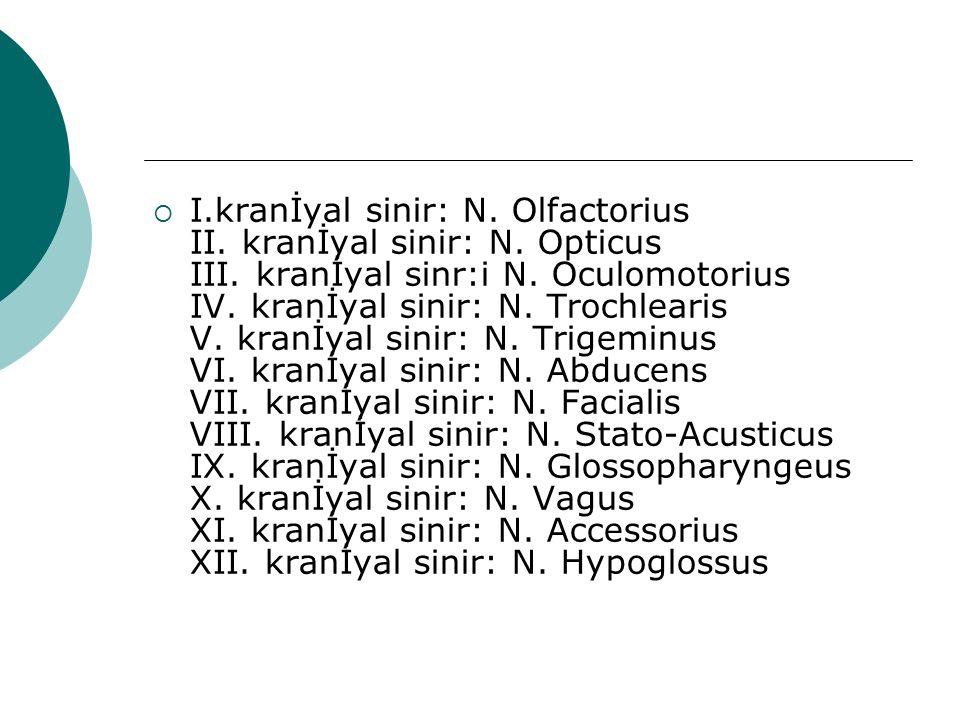  I.kranİyal sinir: N. Olfactorius II. kranİyal sinir: N. Opticus III. kranİyal sinr:i N. Oculomotorius IV. kranİyal sinir: N. Trochlearis V. kranİyal
