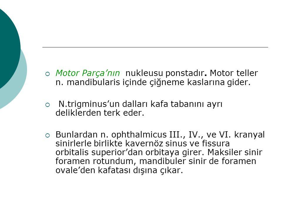 Motor Parça'nın nukleusu ponstadır. Motor teller n. mandibularis içinde çiğneme kaslarına gider.  N.trigminus'un dalları kafa tabanını ayrı delikle