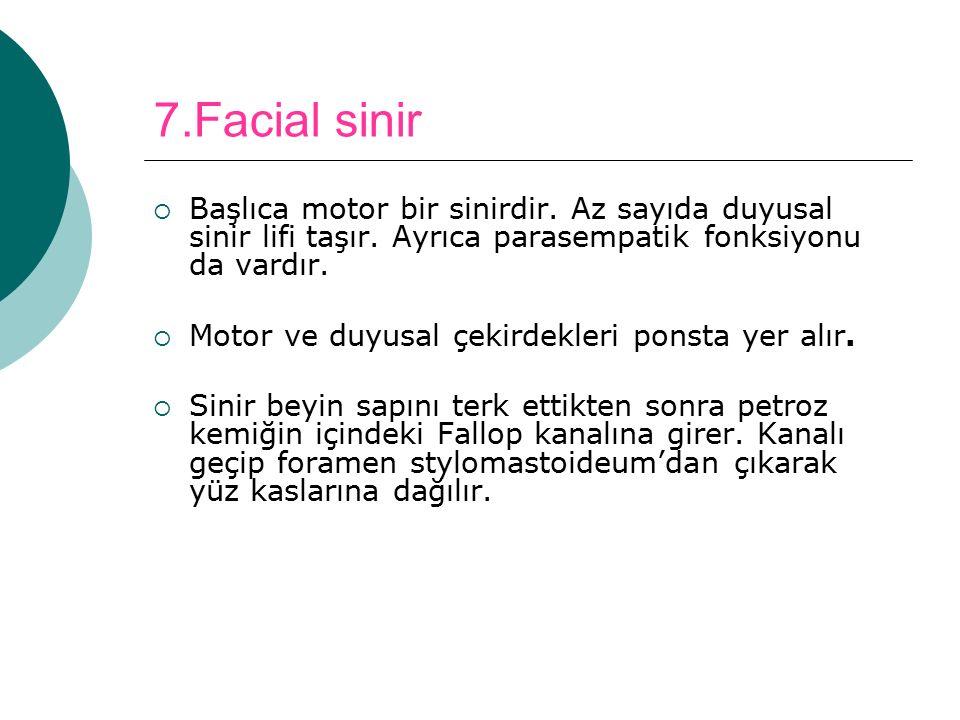 7.Facial sinir  Başlıca motor bir sinirdir. Az sayıda duyusal sinir lifi taşır. Ayrıca parasempatik fonksiyonu da vardır.  Motor ve duyusal çekirdek
