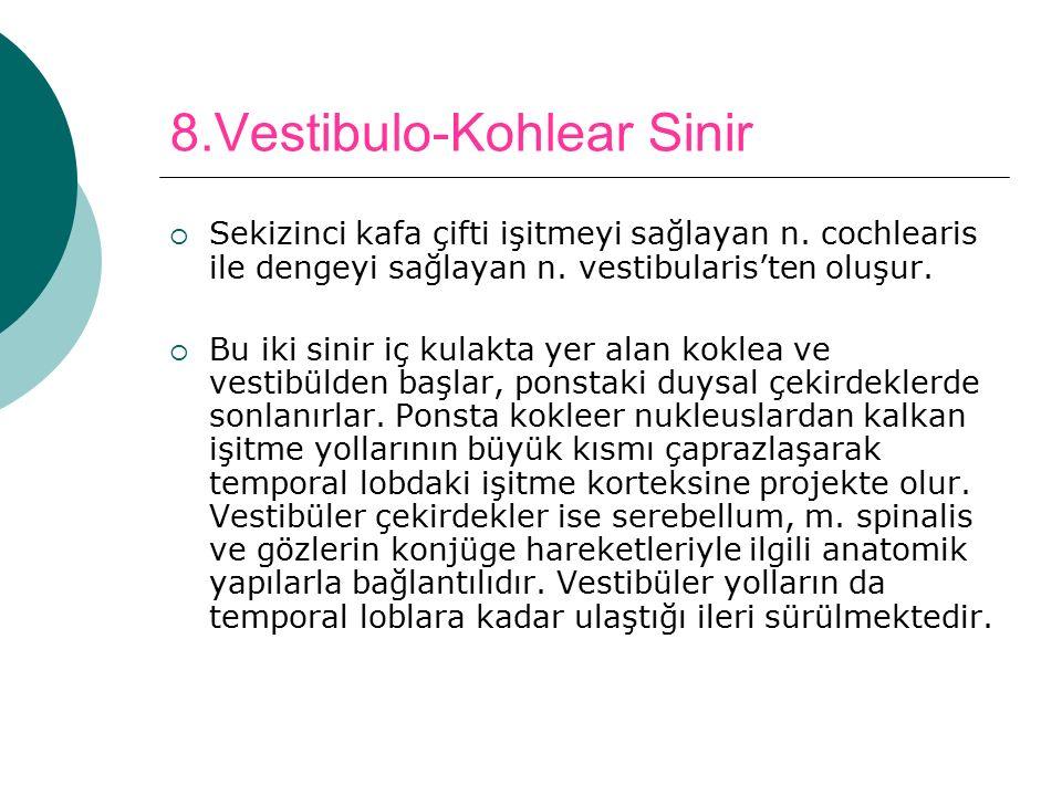 8.Vestibulo-Kohlear Sinir  Sekizinci kafa çifti işitmeyi sağlayan n. cochlearis ile dengeyi sağlayan n. vestibularis'ten oluşur.  Bu iki sinir iç ku