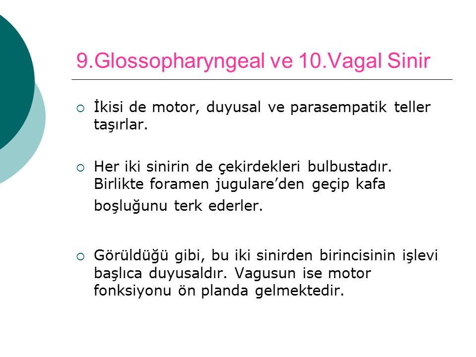 9.Glossopharyngeal ve 10.Vagal Sinir  İkisi de motor, duyusal ve parasempatik teller taşırlar.  Her iki sinirin de çekirdekleri bulbustadır. Birlikt