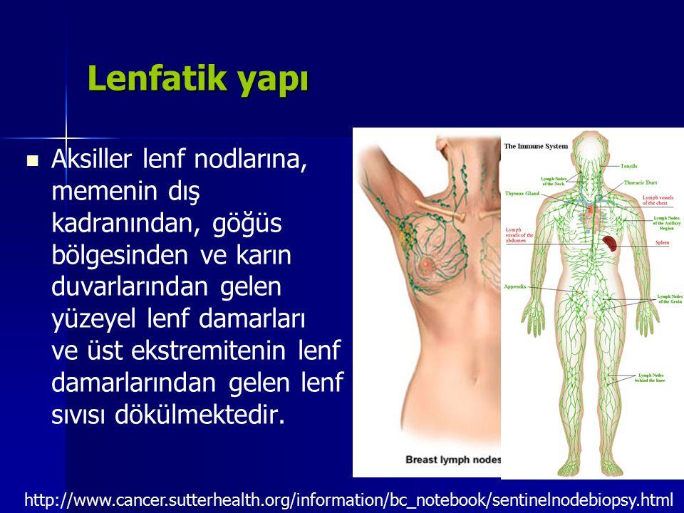 Lenfatik yapı Aksiller lenf nodlarına, memenin dış kadranından, göğüs bölgesinden ve karın duvarlarından gelen yüzeyel lenf damarları ve üst ekstremit