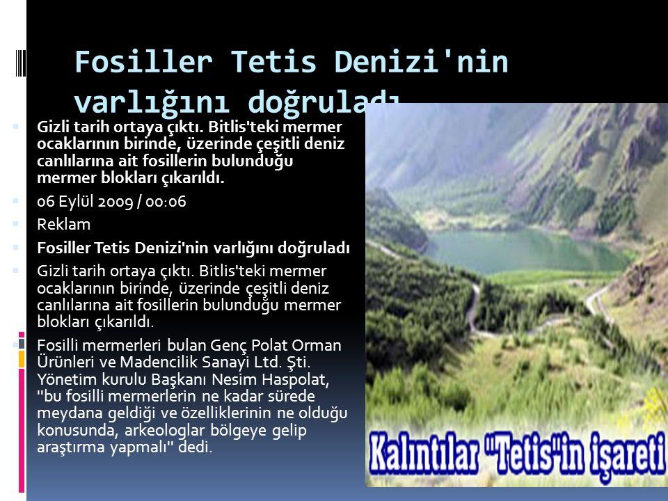 Fosiller Tetis Denizi'nin varlığını doğruladı  Gizli tarih ortaya çıktı. Bitlis'teki mermer ocaklarının birinde, üzerinde çeşitli deniz canlılarına a