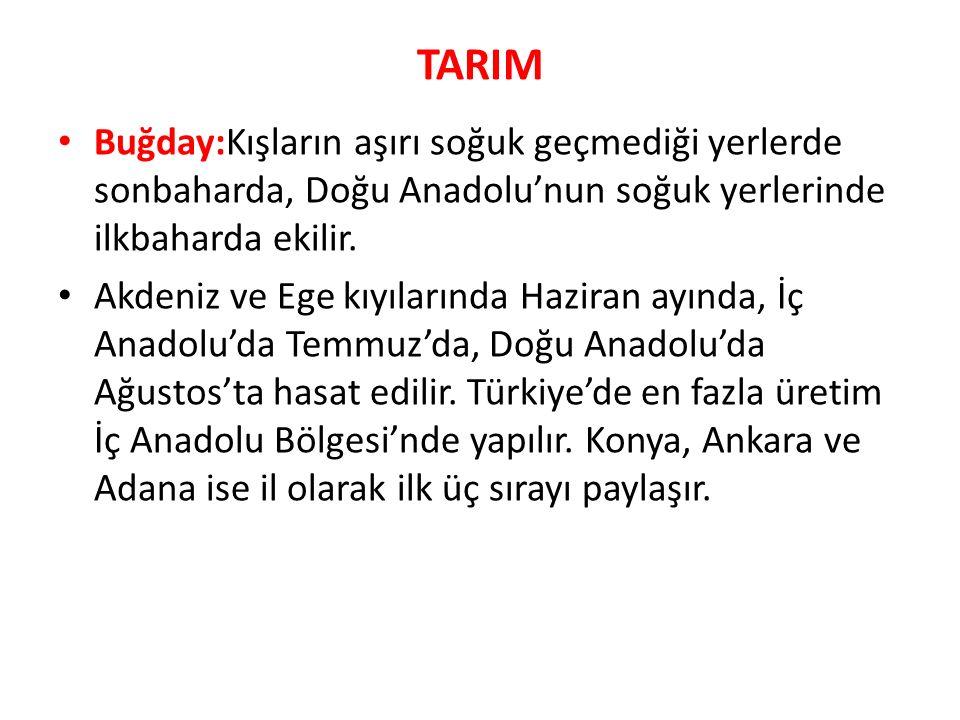 Arpa : Erzurum - Kars plâtolarında 2000 - 2200 m ye kadar yetişebilir.