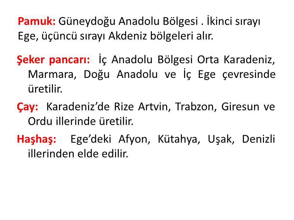 Pamuk: Güneydoğu Anadolu Bölgesi. İkinci sırayı Ege, üçüncü sırayı Akdeniz bölgeleri alır.