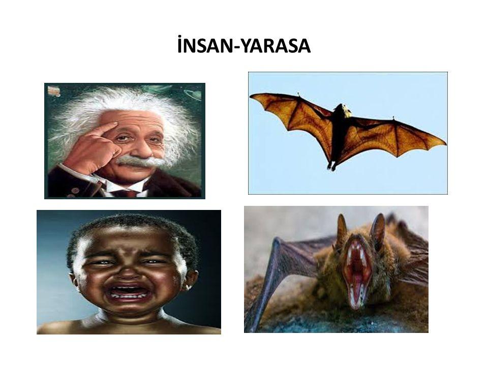 İNSAN-YARASA
