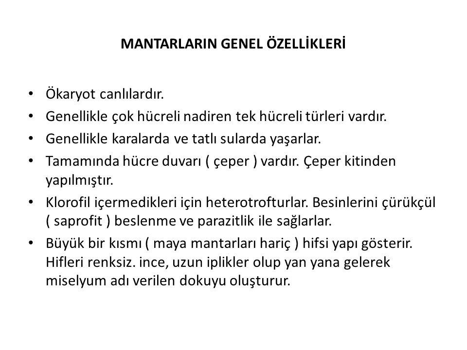 MANTARLARIN GENEL ÖZELLİKLERİ Ökaryot canlılardır.