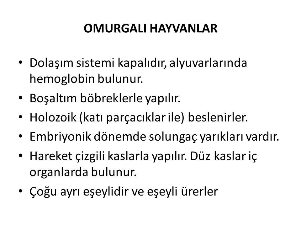 OMURGALI HAYVANLAR Dolaşım sistemi kapalıdır, alyuvarlarında hemoglobin bulunur.