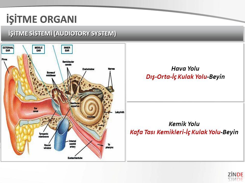 İŞİTME SİSTEMİ (AUDIOTORY SYSTEM) Hava Yolu Dış-Orta-İç Kulak Yolu-Beyin Hava Yolu Dış-Orta-İç Kulak Yolu-Beyin Kemik Yolu Kafa Tası Kemikleri-İç Kula