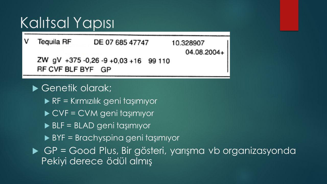 Kalıtsal Yapısı  Genetik olarak;  RF = Kırmızılık geni taşımıyor  CVF = CVM geni taşımıyor  BLF = BLAD geni taşımıyor  BYF = Brachyspina geni taş