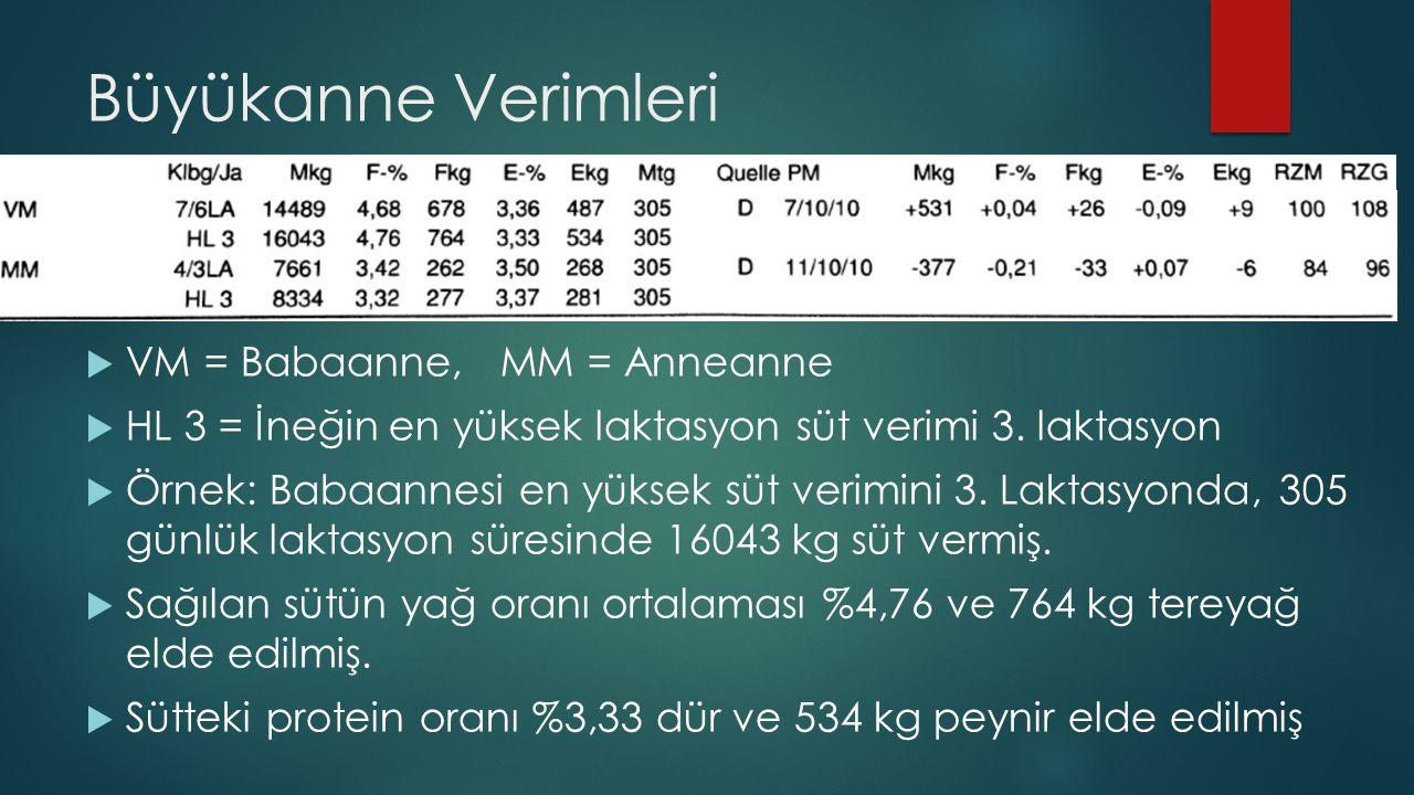 Büyükanne Verimleri  VM = Babaanne, MM = Anneanne  HL 3 = İneğin en yüksek laktasyon süt verimi 3. laktasyon  Örnek: Babaannesi en yüksek süt verim