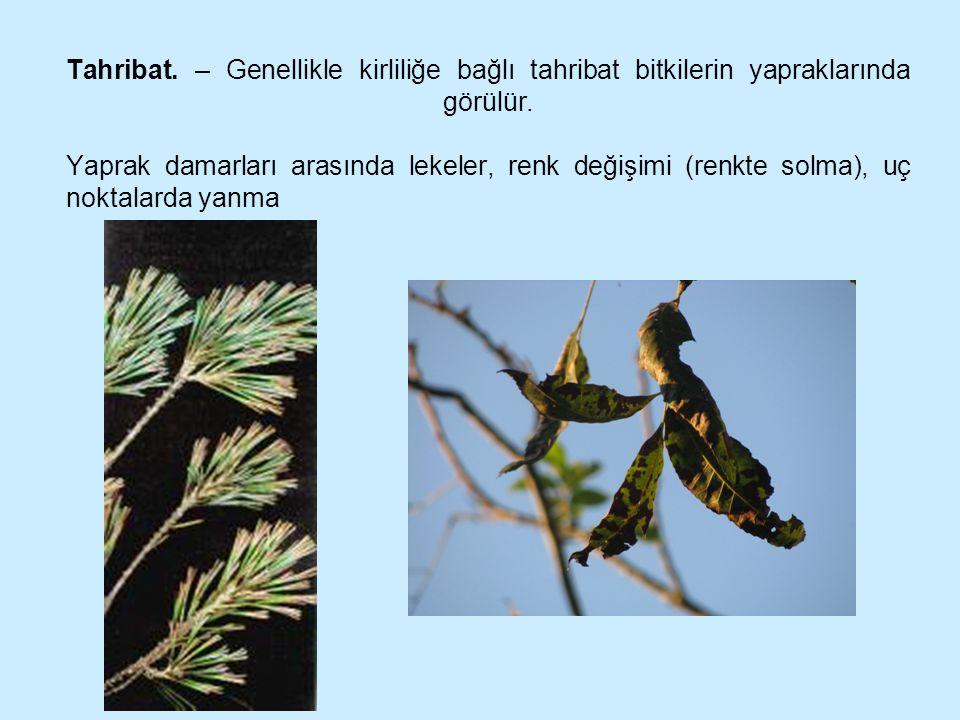 Tahribat. – Genellikle kirliliğe bağlı tahribat bitkilerin yapraklarında görülür. Yaprak damarları arasında lekeler, renk değişimi (renkte solma), uç