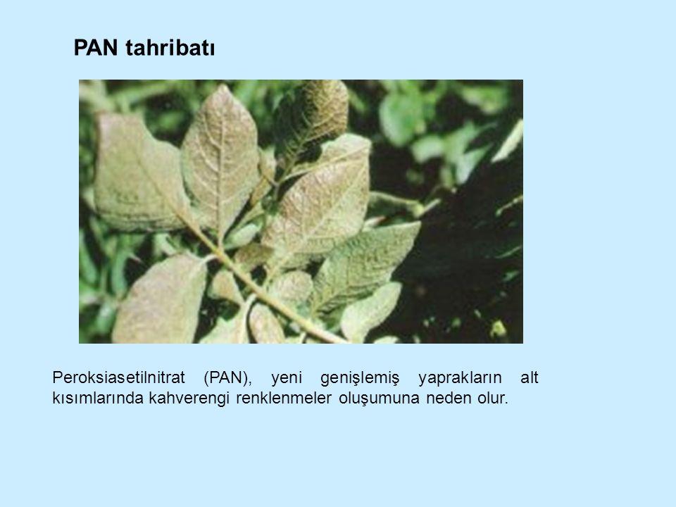 Peroksiasetilnitrat (PAN), yeni genişlemiş yaprakların alt kısımlarında kahverengi renklenmeler oluşumuna neden olur. PAN tahribatı