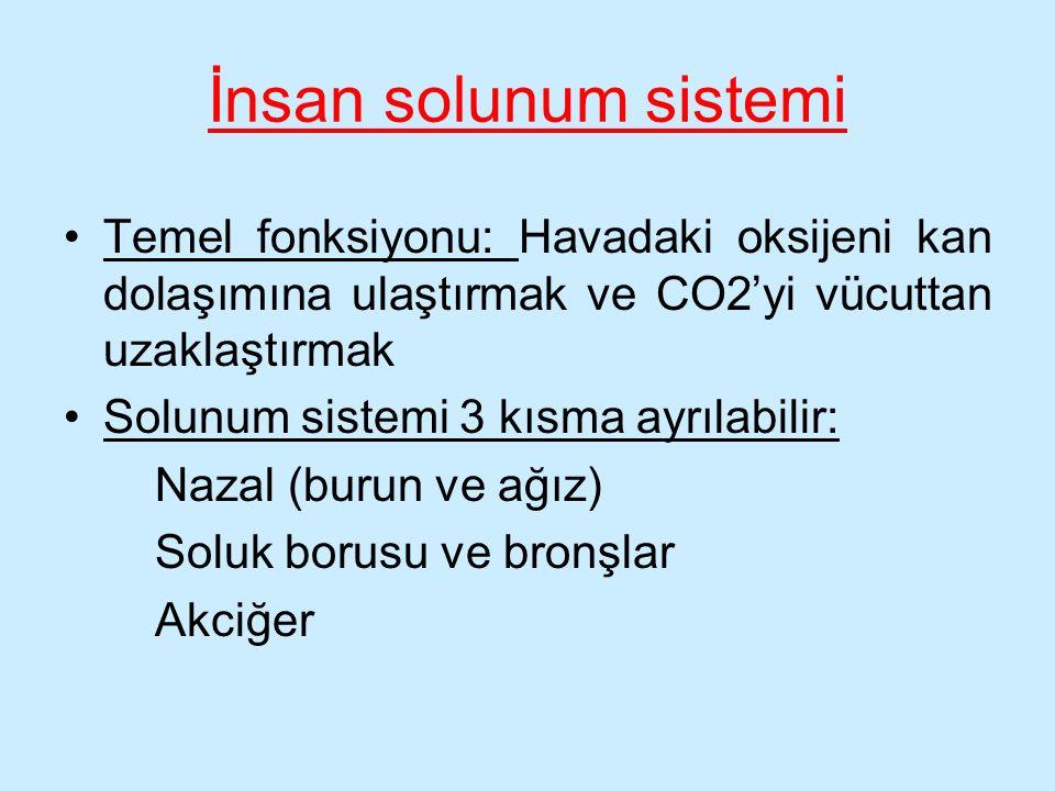 İnsan solunum sistemi Temel fonksiyonu: Havadaki oksijeni kan dolaşımına ulaştırmak ve CO2'yi vücuttan uzaklaştırmak Solunum sistemi 3 kısma ayrılabil