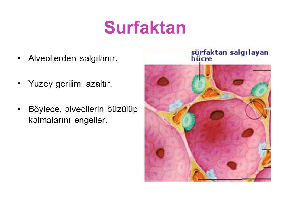 Surfaktan Alveollerden salgılanır. Yüzey gerilimi azaltır. Böylece, alveollerin büzülüp kalmalarını engeller.