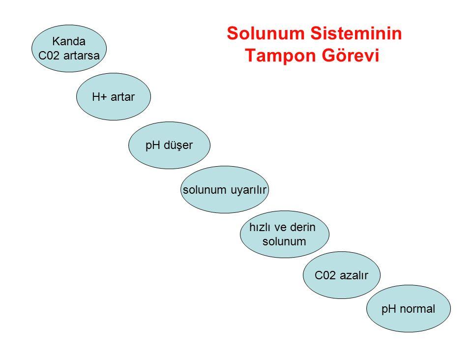 Solunum Sisteminin Tampon Görevi Kanda C02 artarsa pH düşer solunum uyarılır C02 azalır H+ artar hızlı ve derin solunum pH normal