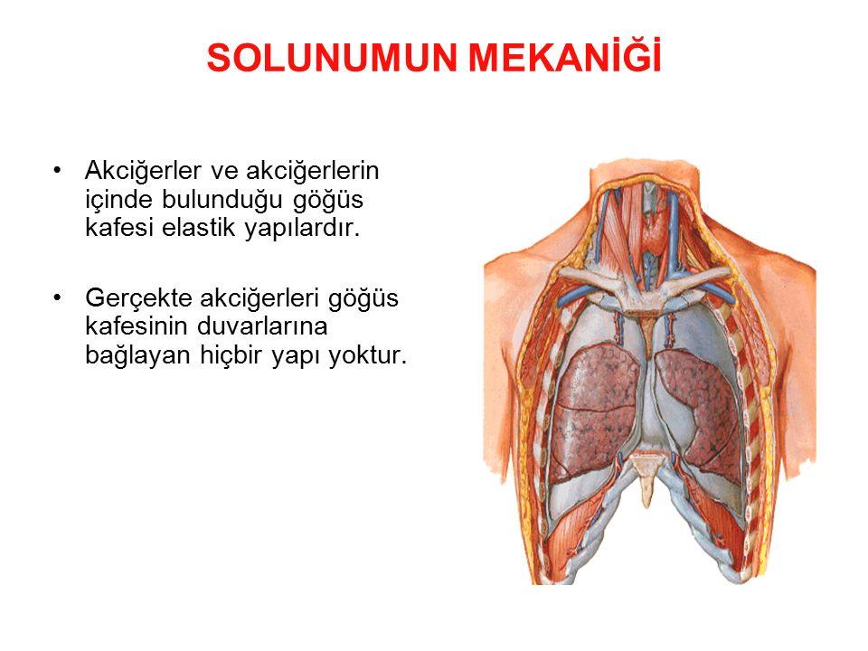 SOLUNUMUN MEKANİĞİ Akciğerler ve akciğerlerin içinde bulunduğu göğüs kafesi elastik yapılardır. Gerçekte akciğerleri göğüs kafesinin duvarlarına bağla