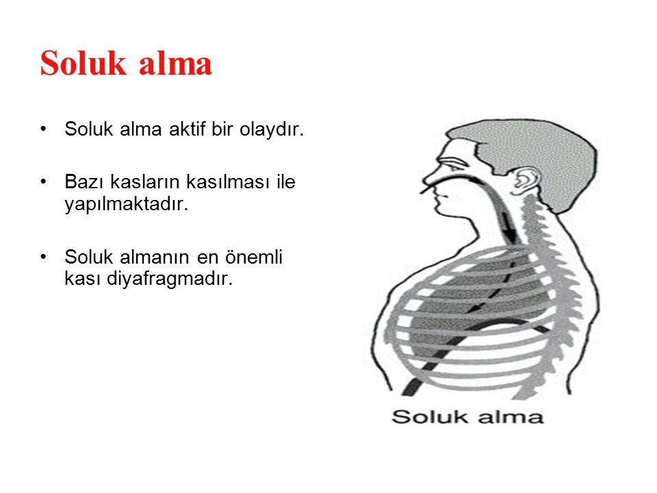 Soluk alma Soluk alma aktif bir olaydır. Bazı kasların kasılması ile yapılmaktadır. Soluk almanın en önemli kası diyafragmadır.
