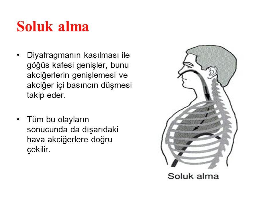 Soluk alma Diyafragmanın kasılması ile göğüs kafesi genişler, bunu akciğerlerin genişlemesi ve akciğer içi basıncın düşmesi takip eder. Tüm bu olaylar