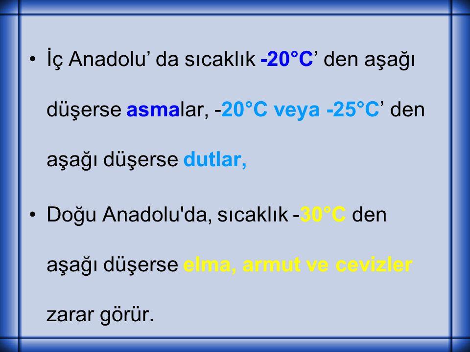 İç Anadolu' da sıcaklık -20°C' den aşağı düşerse asmalar, -20°C veya -25°C' den aşağı düşerse dutlar, Doğu Anadolu da, sıcaklık -30°C den aşağı düşerse elma, armut ve cevizler zarar görür.