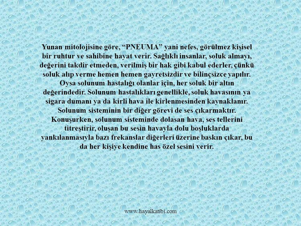 SOLUNUM SİSTEMİ BÖLÜMLERİ www.hayalkatibi.com