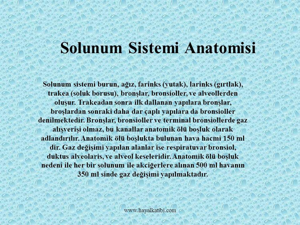 Solunum Sistemi Anatomisi Solunum sistemi burun, ağız, farinks (yutak), larinks (gırtlak), trakea (soluk borusu), bronşlar, bronsioller, ve alveollerden oluşur.