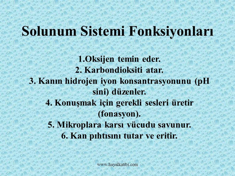 Solunum Sistemi Fonksiyonları www.hayalkatibi.com 1.Oksijen temin eder.