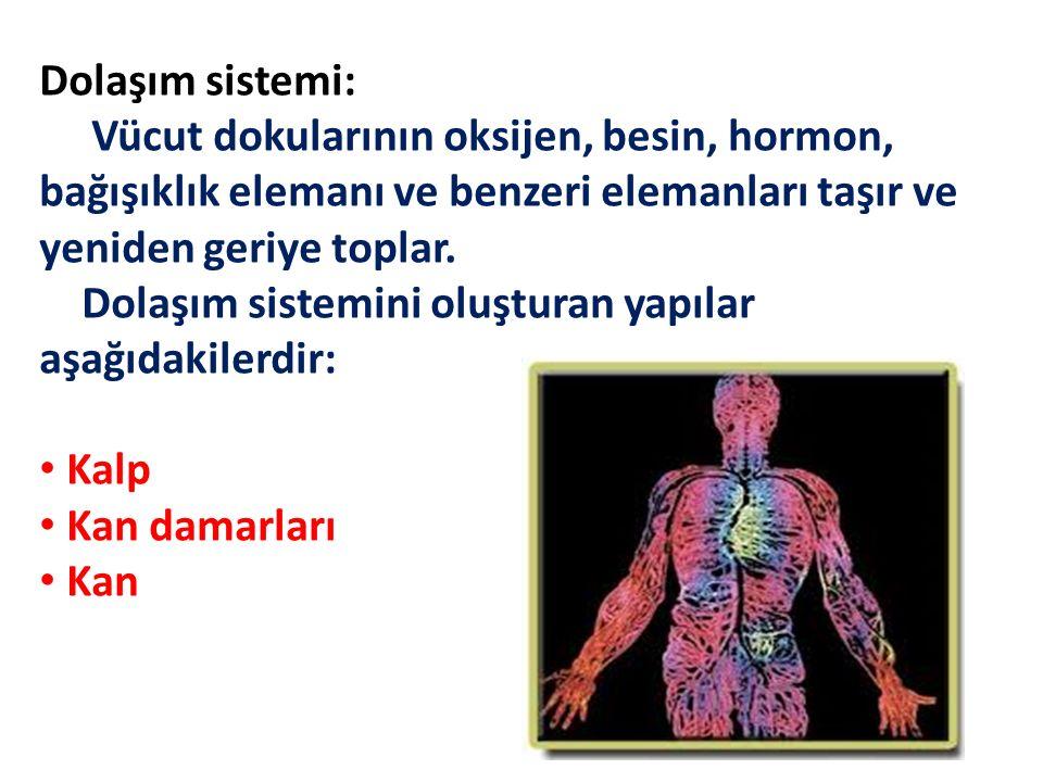 Dolaşım sistemi: Vücut dokularının oksijen, besin, hormon, bağışıklık elemanı ve benzeri elemanları taşır ve yeniden geriye toplar. Dolaşım sistemini