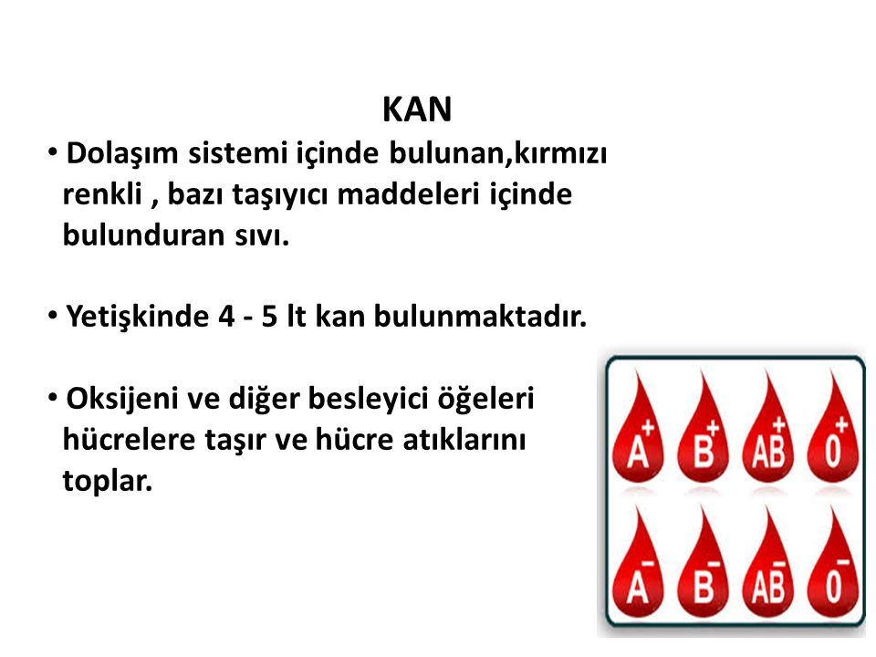 KAN Dolaşım sistemi içinde bulunan,kırmızı renkli, bazı taşıyıcı maddeleri içinde bulunduran sıvı. Yetişkinde 4 - 5 lt kan bulunmaktadır. Oksijeni ve