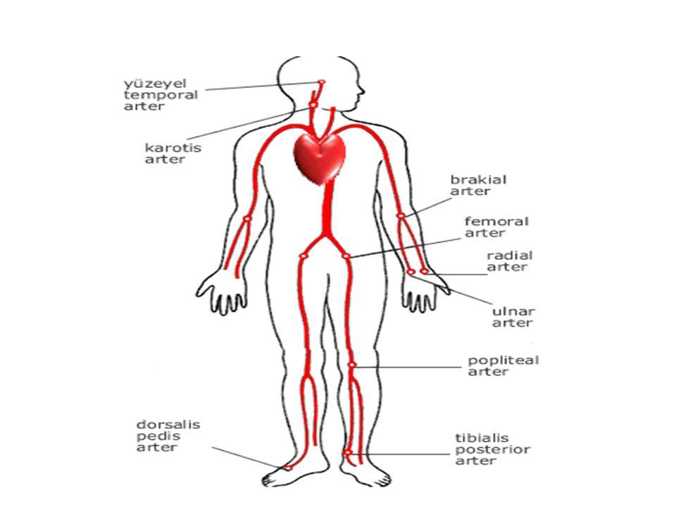 Kan Basıncı Kalbin kasılma ve gevşeme anında damar duvarına yaptığı basınçtır.