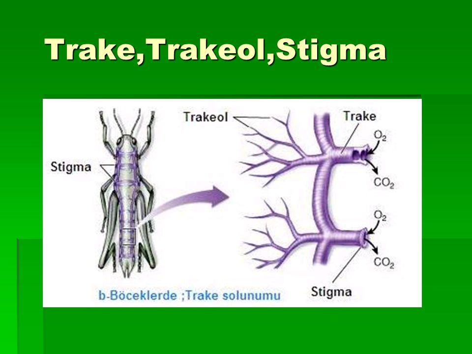 Trake,Trakeol,Stigma