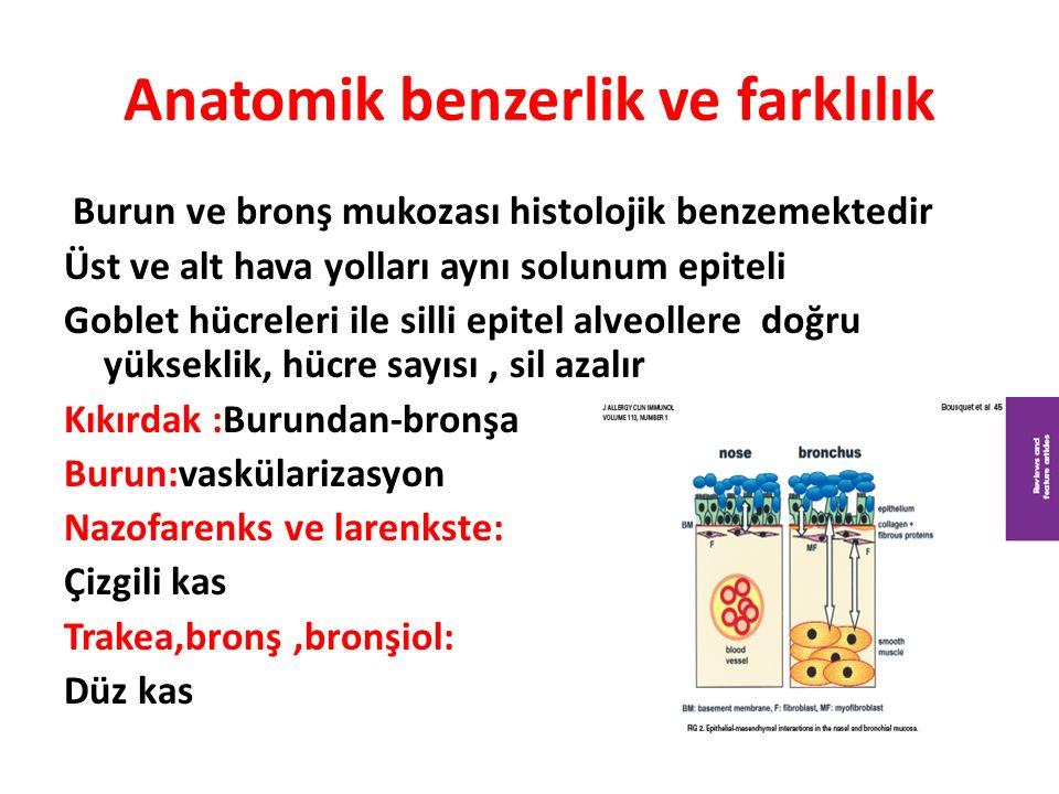 Anatomik benzerlik ve farklılık Burun ve bronş mukozası histolojik benzemektedir Üst ve alt hava yolları aynı solunum epiteli Goblet hücreleri ile silli epitel alveollere doğru yükseklik, hücre sayısı, sil azalır Kıkırdak :Burundan-bronşa Burun:vaskülarizasyon Nazofarenks ve larenkste: Çizgili kas Trakea,bronş,bronşiol: Düz kas