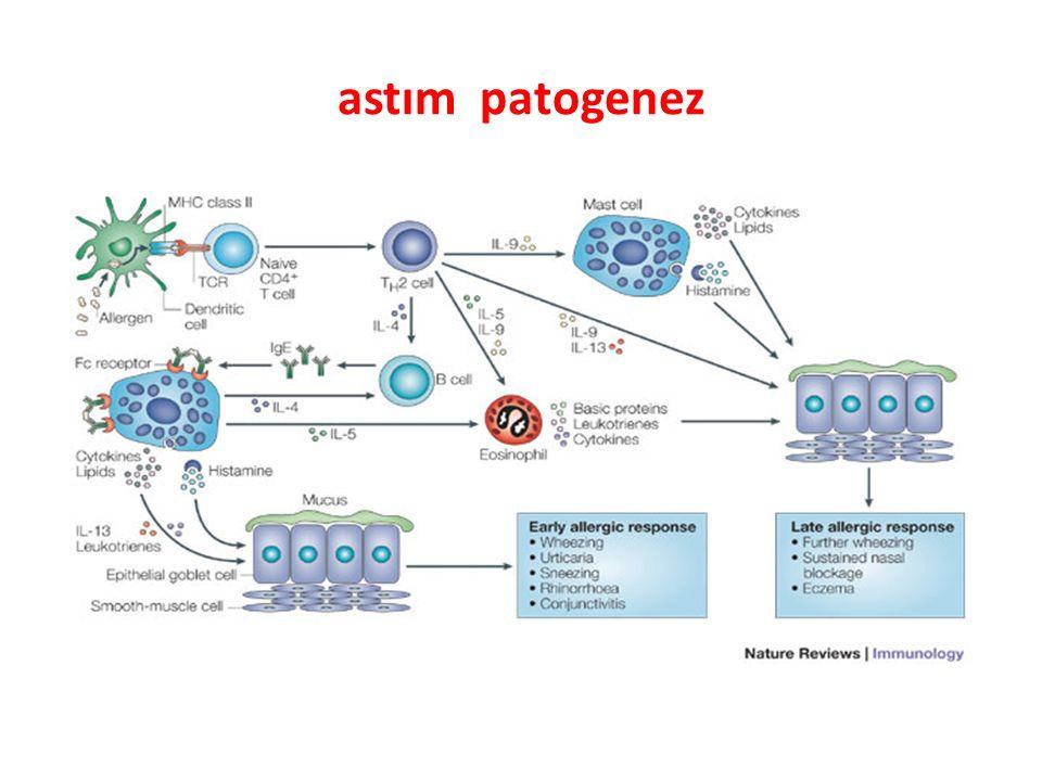 astım patogenez