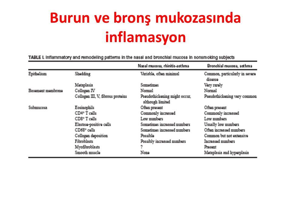 Burun ve bronş mukozasında inflamasyon