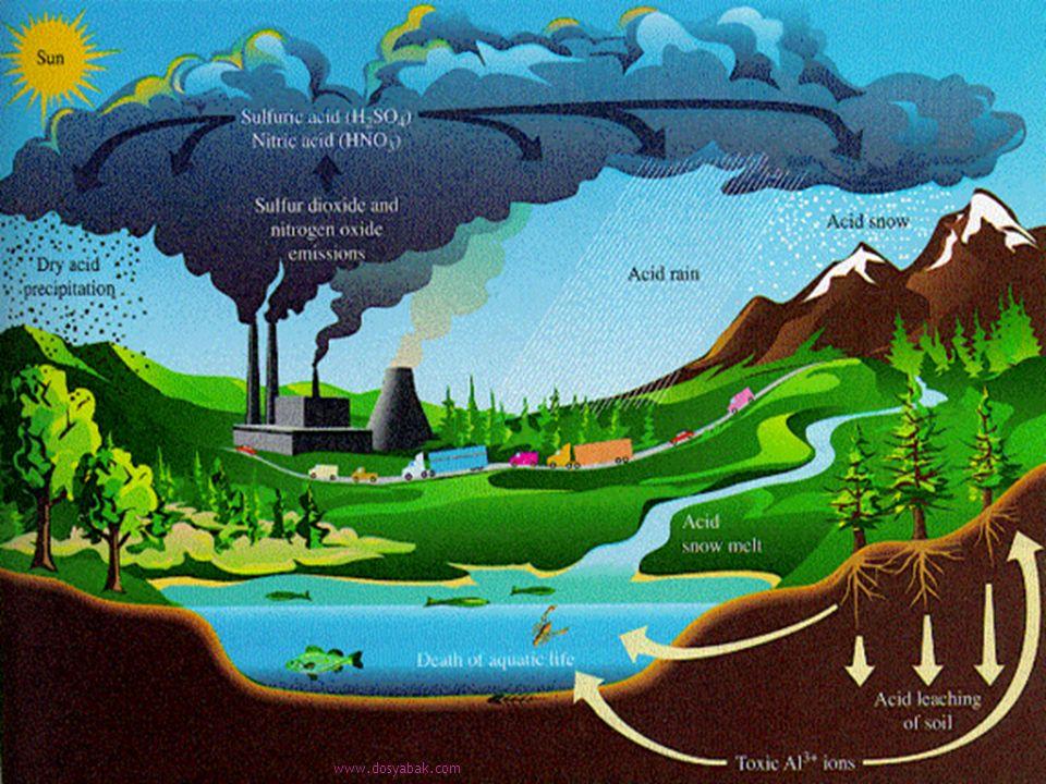  asit yağmurunun iç suları etkilediği,  yüzlerce, hatta binlerce göl ve nehirin doğal dengesinin bozulduğu,  bu göllerin giderek canlıların barınamayacağı ölü sular haline dönüştüğü,  iç sulardan başka, karasal ekosistemlerin bitki örtülerinin de zarar gördüğü,  yağmurdaki asidin fotosentezi etkiledikten başka, topraktaki besleyici tuzların akıp gitmesine neden olduğu gündeme getirilmiştir.