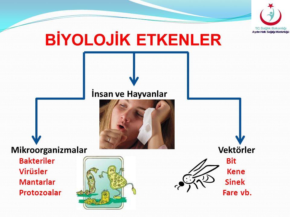 BİYOLOJİK ETKENLER İnsan ve Hayvanlar Mikroorganizmalar Vektörler Bakteriler Bit Virüsler Kene Mantarlar Sinek Protozoalar Fare vb.