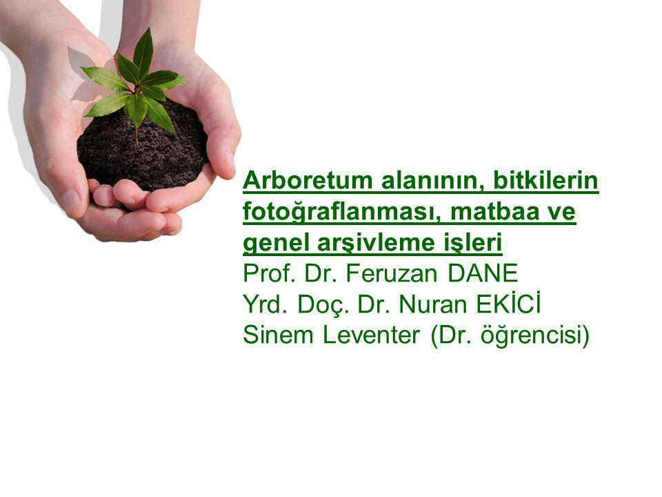 Arboretum alanının, bitkilerin fotoğraflanması, matbaa ve genel arşivleme işleri Prof.