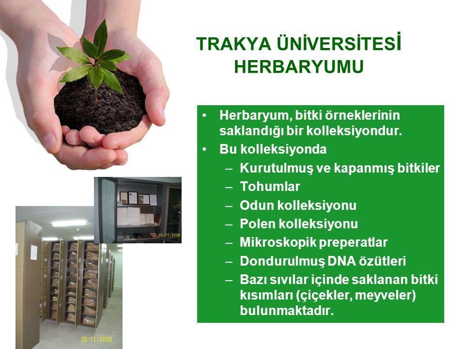 TRAKYA ÜNİVERSİTES İ HERBARYUMU Herbaryum, bitki örneklerinin saklandığı bir kolleksiyondur.