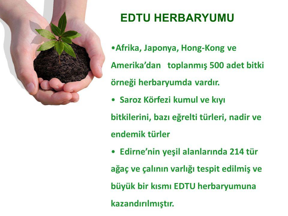 Afrika, Japonya, Hong-Kong ve Amerika'dan toplanmış 500 adet bitki örneği herbaryumda vardır.