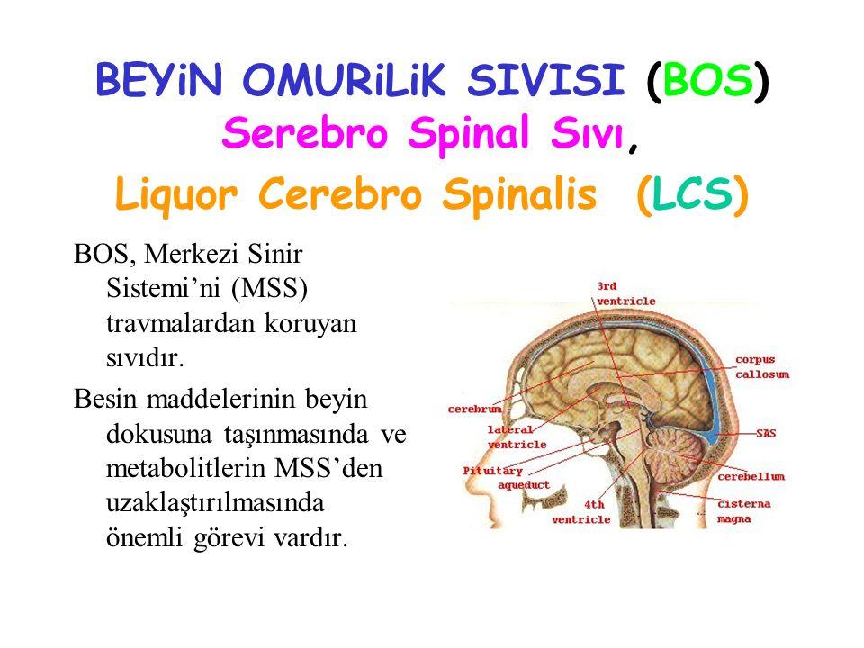 BEYiN OMURiLiK SIVISI (BOS) Serebro Spinal Sıvı, Liquor Cerebro Spinalis (LCS) BOS, Merkezi Sinir Sistemi'ni (MSS) travmalardan koruyan sıvıdır. Besin